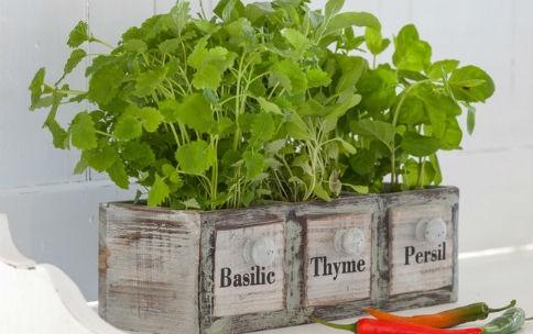 Doniczki Ozdobne Do Kuchni 7 Pomysłów Na Przechowywanie