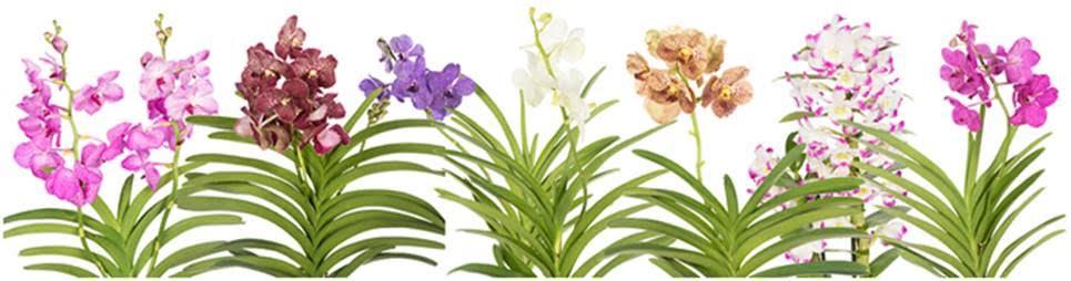 rośliny orientalne