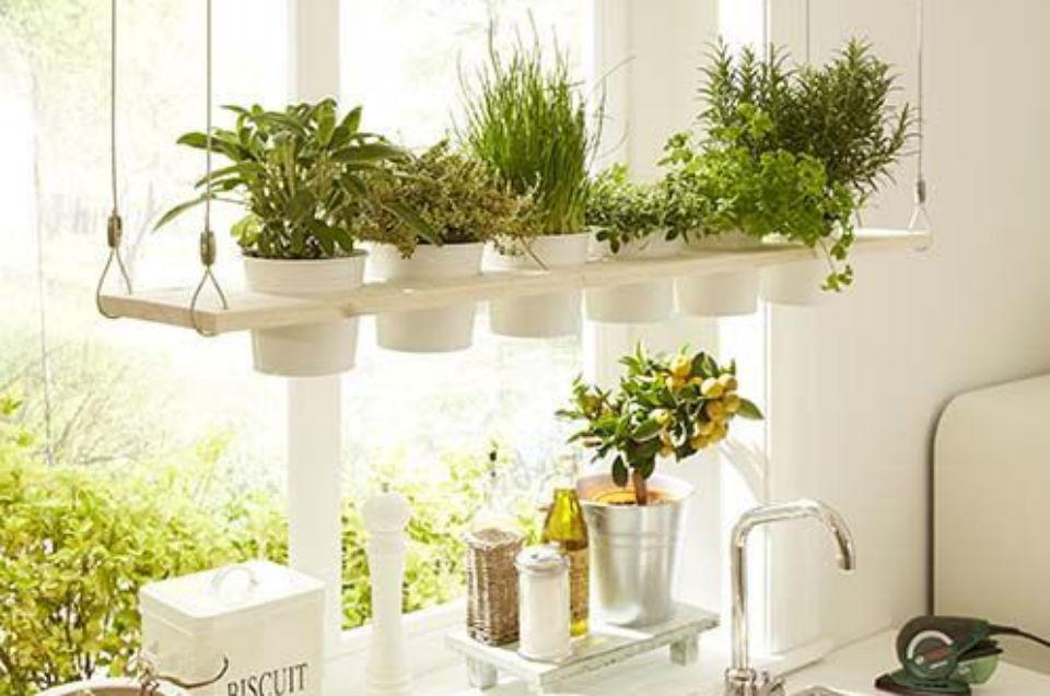 jakie zioła do domu