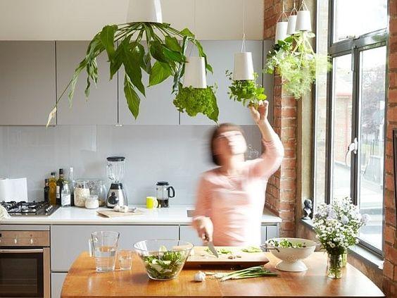 kuchnia w ziołach