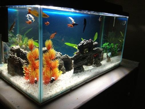 wybieramy oświetlenie do akwarium